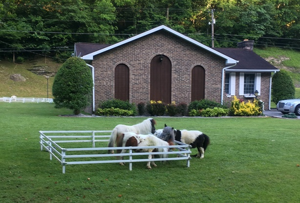 Hatfield McCoy Mini-dwarf horses at mile 10 of Marathon