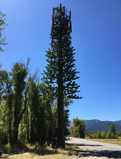 Tree Transformer seen at Jackson Hole Marathon