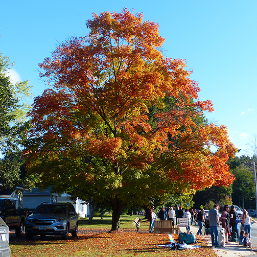 Fall foliage in Keene, NH along the Clarence DeMar Marathon course