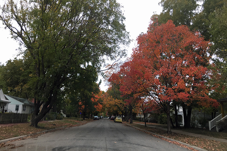 Autumn foliage in Ottawa KS